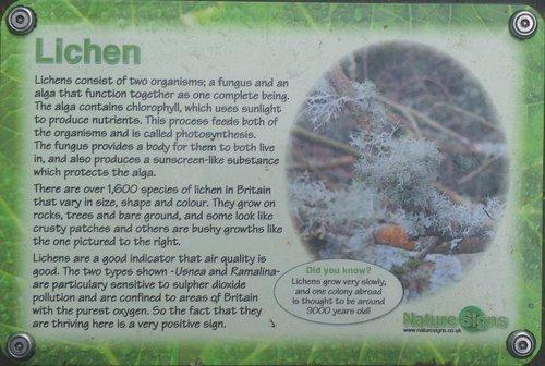5 Lichen