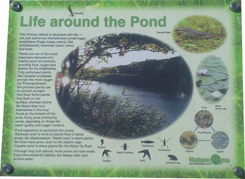 6 Life around the pond