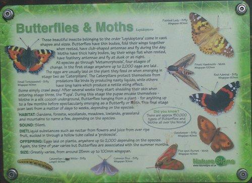 7 Butterflies